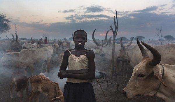 A young, unmarried girl stands amid a herd of cattle outside Bor, the capital of Jonglei State. Cattle carry significant social, economic, and cultural importance for South Sudan's pastoralist ethnic groups, which use cows for payment of dowry - a key driver of child marriage. Bor Jonglei State, February 2013. © 2013 Brent Stirton/Reportage for Human Rights Watch