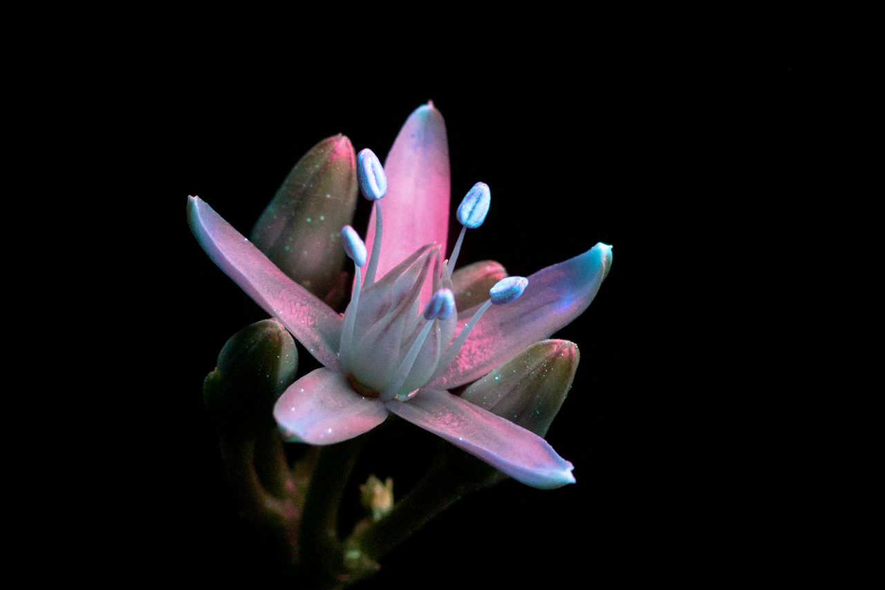 http://i2.wp.com/www.cpburrows.com/wp-content/uploads/2016/03/New-Succulent-Flower-1-Small.jpg?fit=1280%2C853