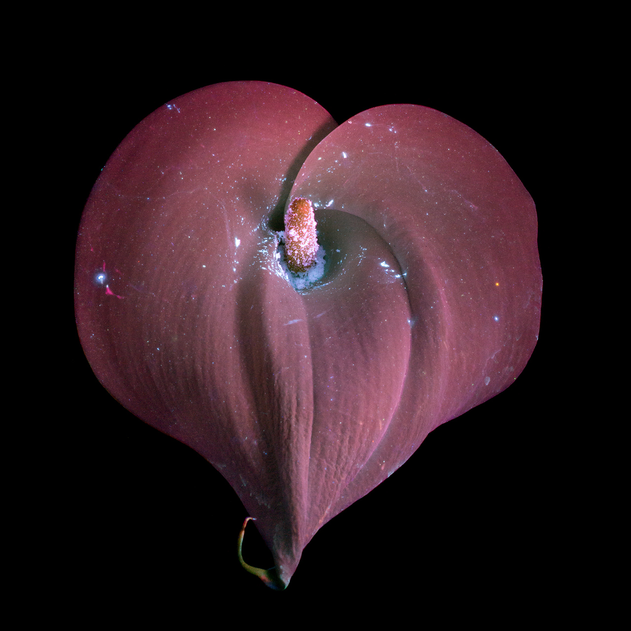 http://i2.wp.com/www.cpburrows.com/wp-content/uploads/2016/04/Calla-Lily-Heart-small.jpg?fit=1280%2C1280