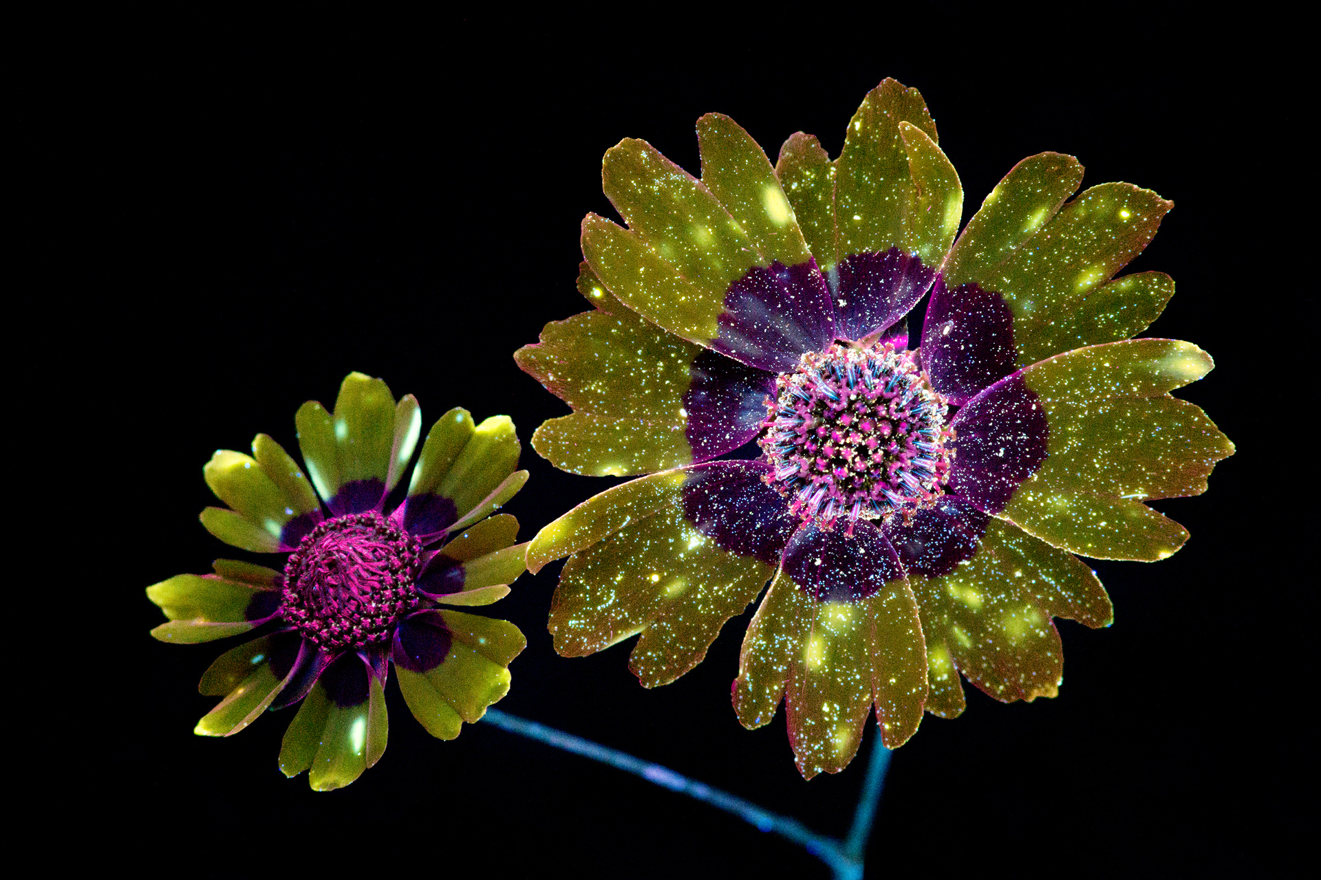 http://i2.wp.com/www.cpburrows.com/wp-content/uploads/2017/01/Plains-Coreopsis-Pair-2-Small.jpg?fit=1920%2C1280