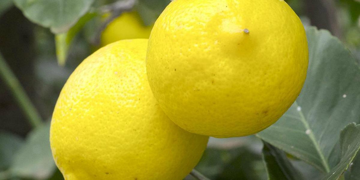 """Le peeling au citron ou quand le vieil adage """"il faut souffrir pour être belle"""" prend tout son sens"""