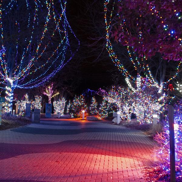 Riverbanks Zoo Lights Christmas