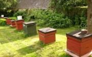 Crabbs Bluntshay Farm Bee Hives