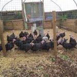 Crabbs Bluntshay Farm, Bridport