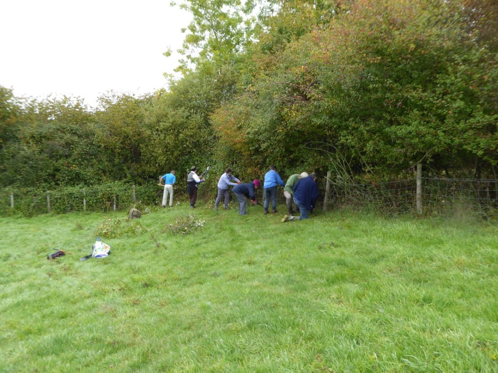 HEDGE LAYING BY VOLUNTEERS FROM THE DORSET WILDLIFE TRUST