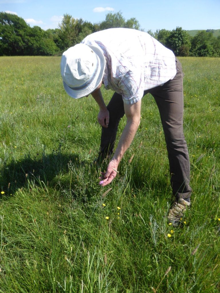 RESEEDING OF THE MEADOW