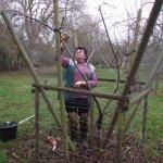 Apple Tree Pruning - Crabbs Bluntshay Farm