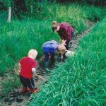 Children in the ditch looking for fossils