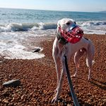 DAY OUT WITH GREYHOUNDS