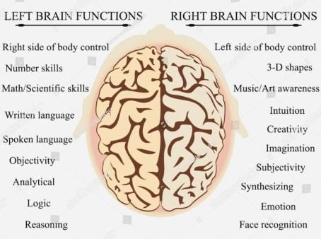 Function ofBrain