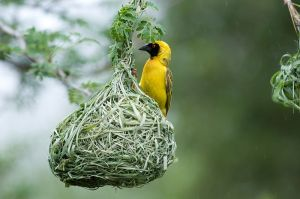 Finches nests have blown away