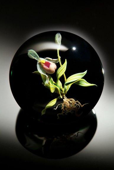 Katherine Stankard Campbell, Paphiopedilum Orchid Paperweight, 2008. Douglas Schaible photograph