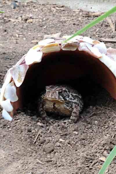 DIY Toad Houses
