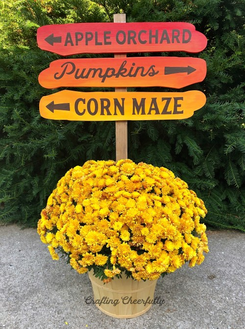 Picture of a yellow mum plant outside with fall directional sign in it. Sign reads Apple Orchard, Pumpkins and Corn Maze with arrows.
