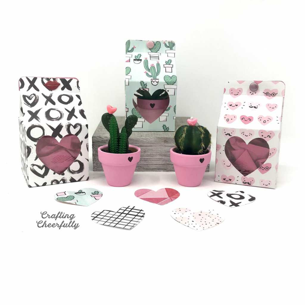 Small cactus and succulent plants sitting in hand-painted pink pots. One is in a paper box with a heart-shaped window showing the cactus plant inside. Two more boxes in other paper designs are filled with pink tissue paper.