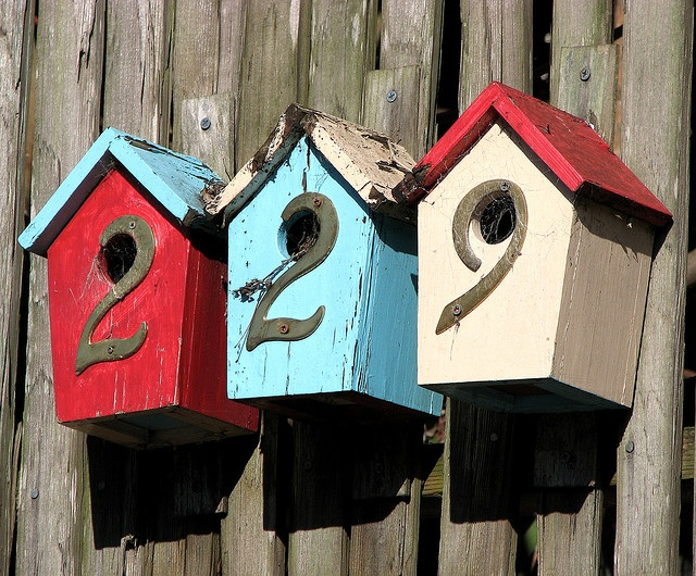 bird house number