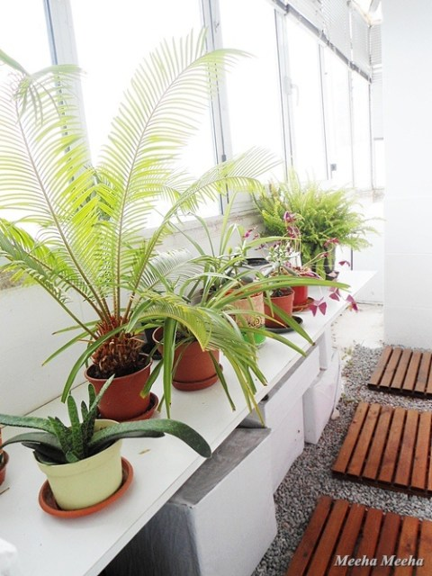 small home projects green