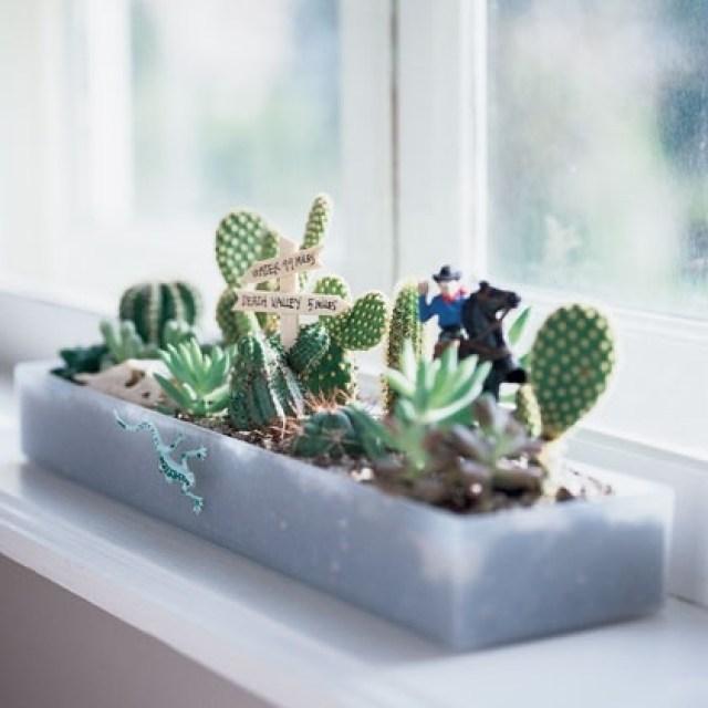 windowsill cacti garden desert