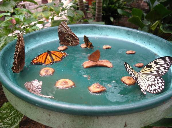 bird bath butterfly feeder