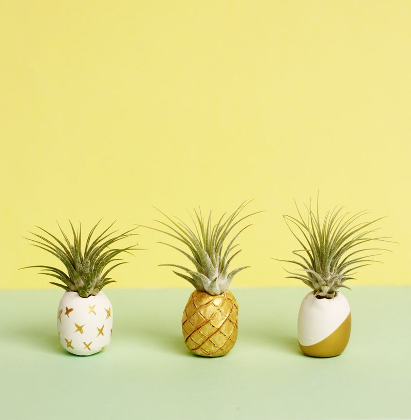 pineapple-airplant-holders