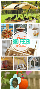 DIY bird feeders best ideas