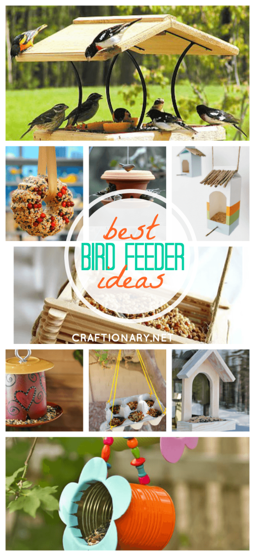 DIY bird feeders best ideas