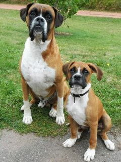 father and son boxers