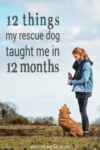 12 things my rescue dog taught me in 12 months