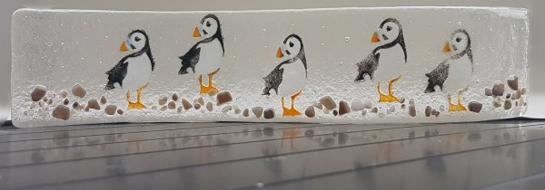 Flock of standing puffins