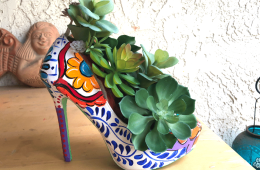 succulent shoe
