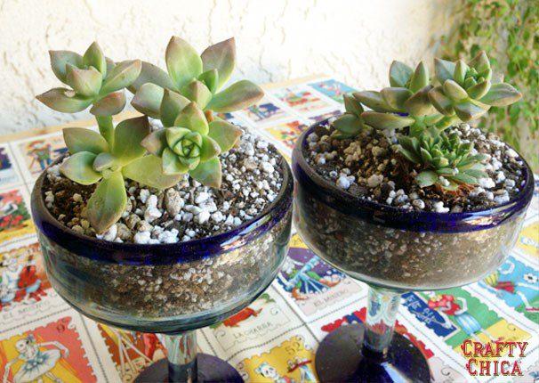 cactus-garden7