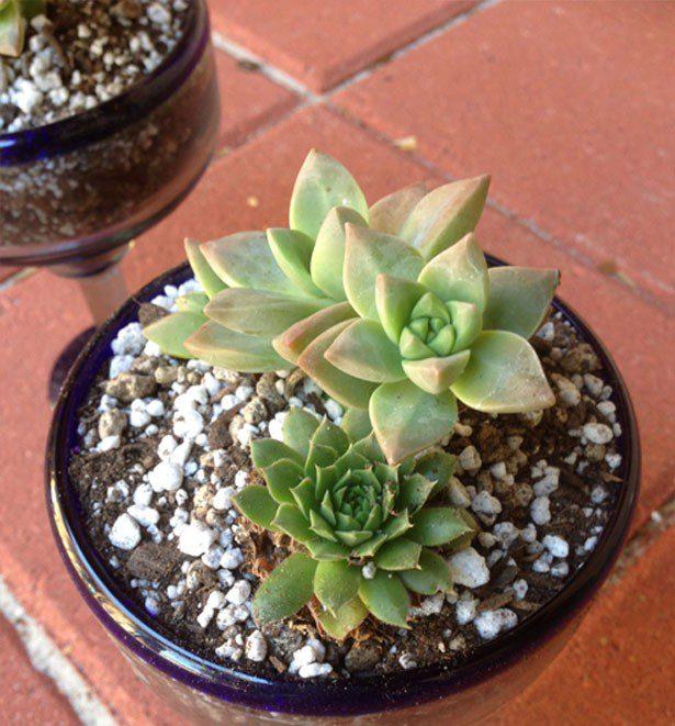 cactus-garden8