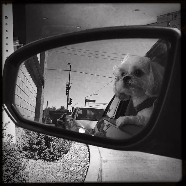 dog-car-ride