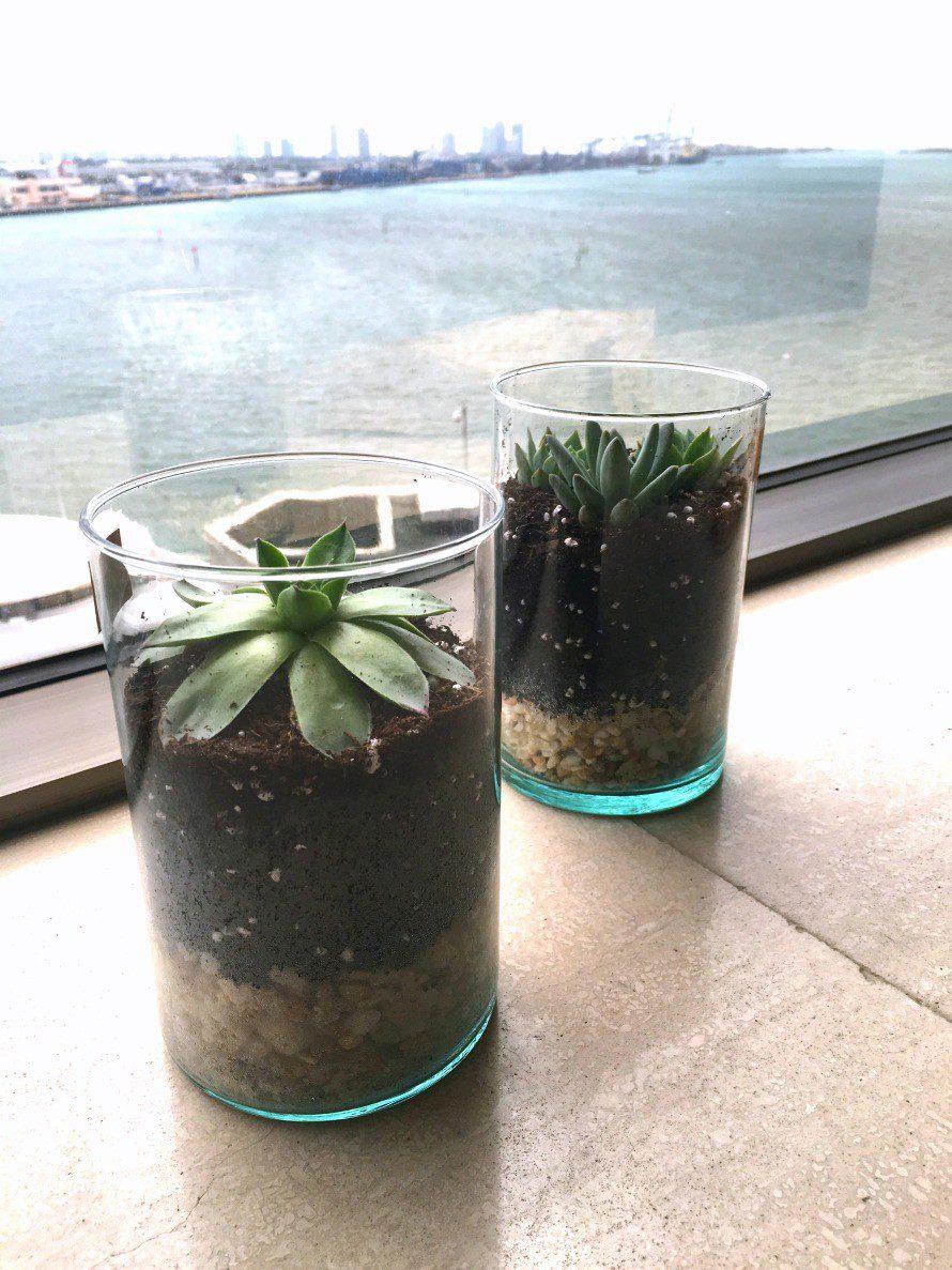 succulent-terrarium