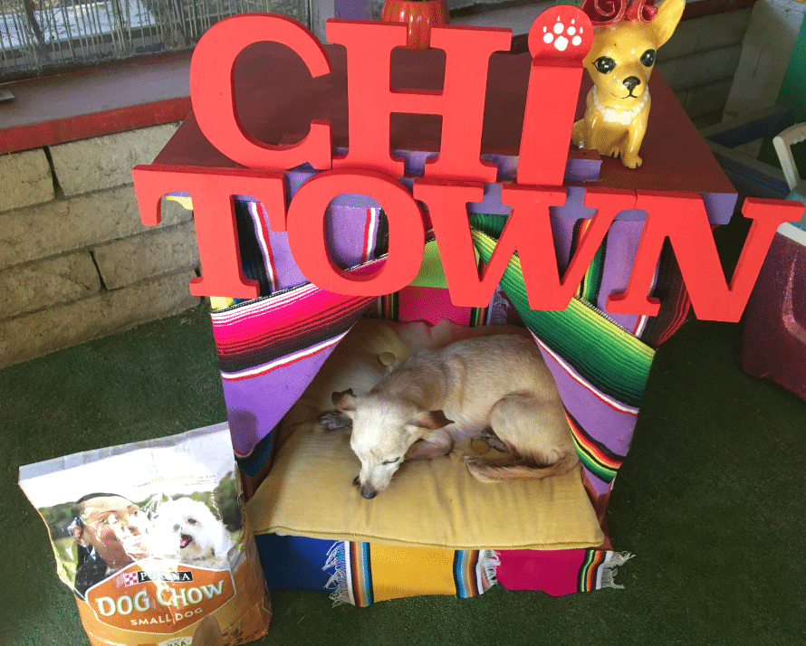 chihuahua-dog-bed6