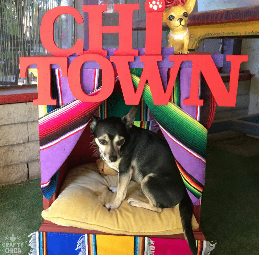 chihuahua-dog-house