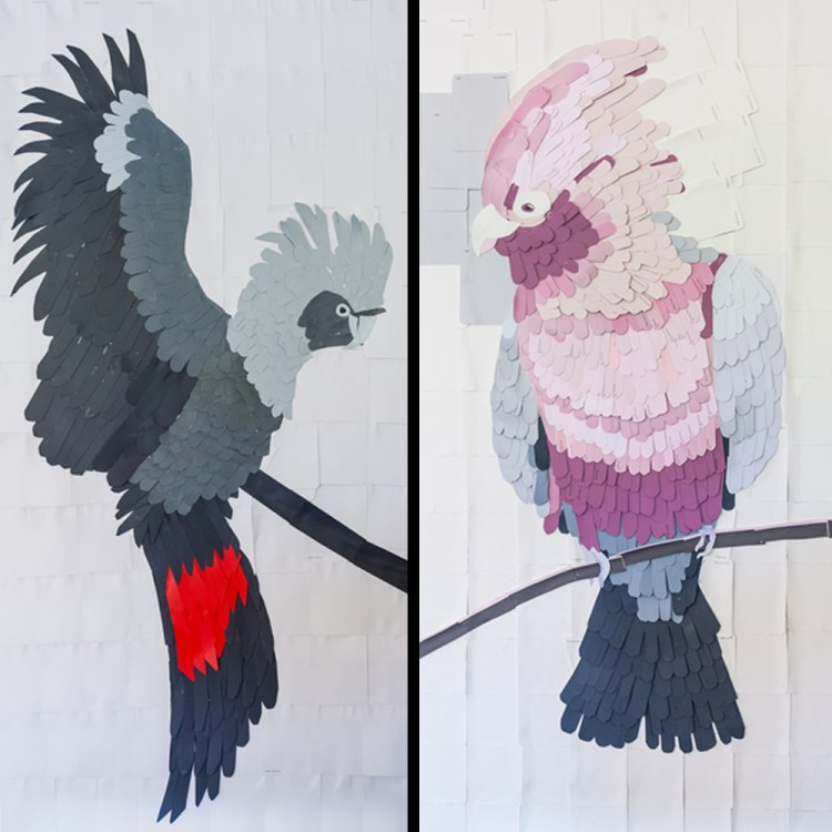 Shaynna-blaze-taubmans-bird-week