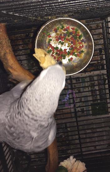 Pet Appreciation Week -- Visit CraftyJBird.com for more info...
