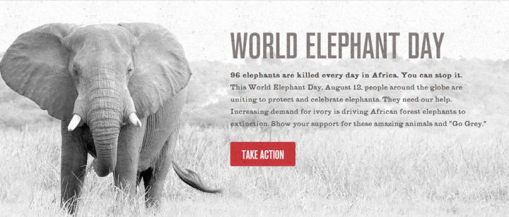 World Elephant Day    96 Elephants    Wildlife Conservation Society