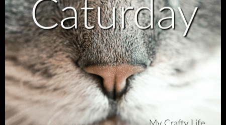Caturday – products for cat lovers