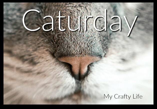 Caturday - My Crafty Life Products For Cat Lovers