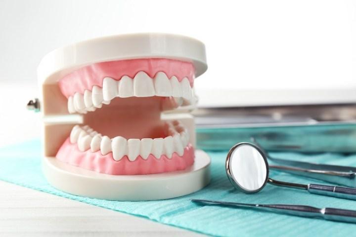 full dentures model