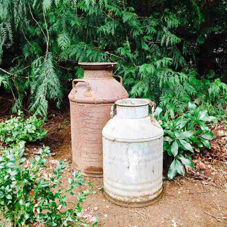 Antique Milk Can Yard Art