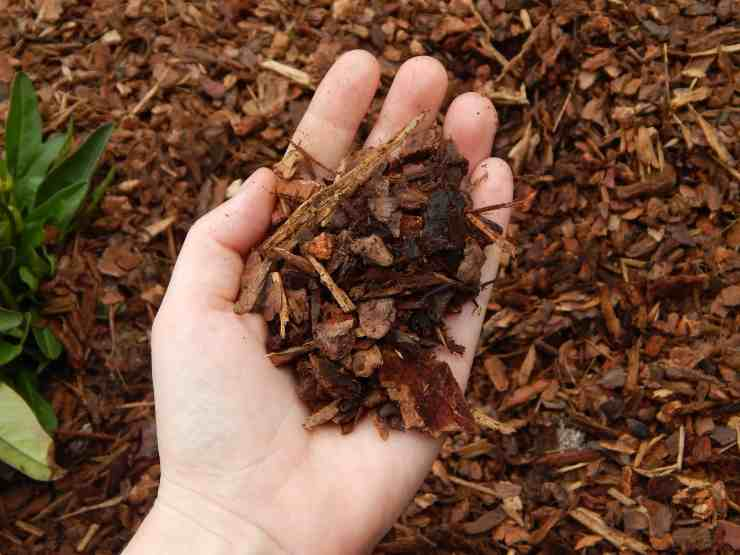 Gardening With Mulch