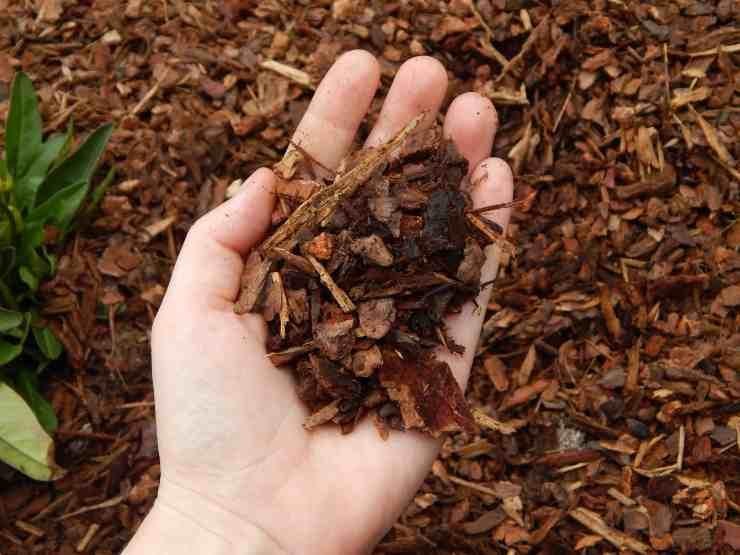 Gardening With Mulch