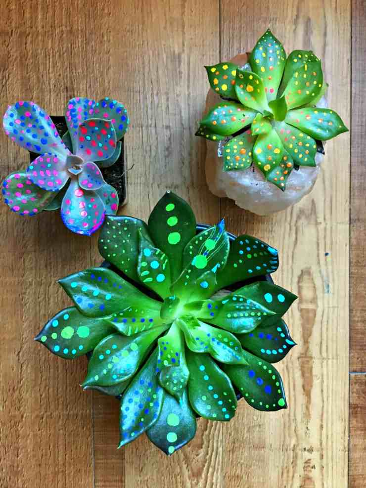Painted Succulents