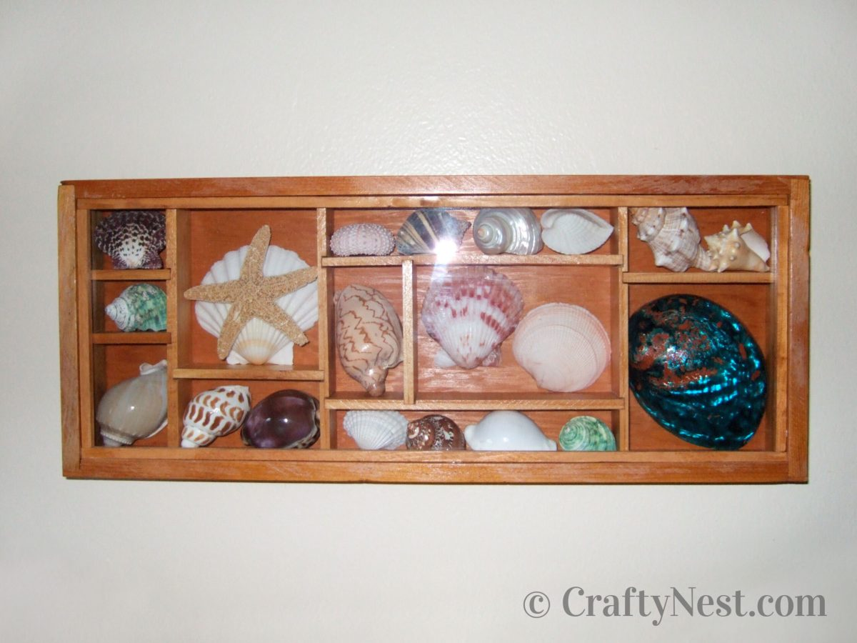 Horizontal shadowbox with seashells, photo