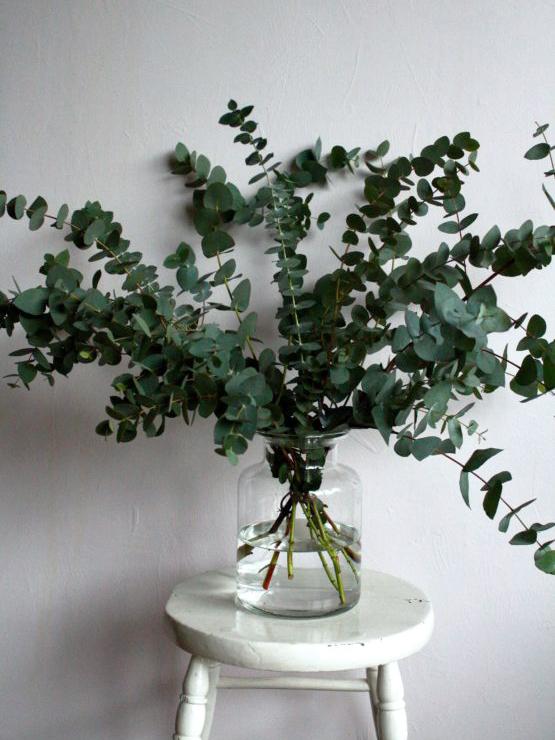 Eucalyptus in a vase, photo