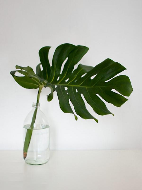 Monstera leaf in a vase, photo