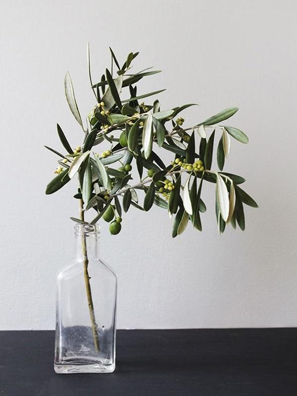 Olive branch in a vase, photo